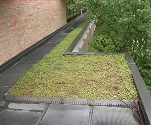 Green Roofs Hoekstra Roofing Company Green Roof