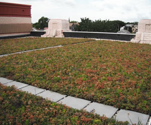 Green Roof Systems Can Incorporate Many Varieties Of Colorful Plantings